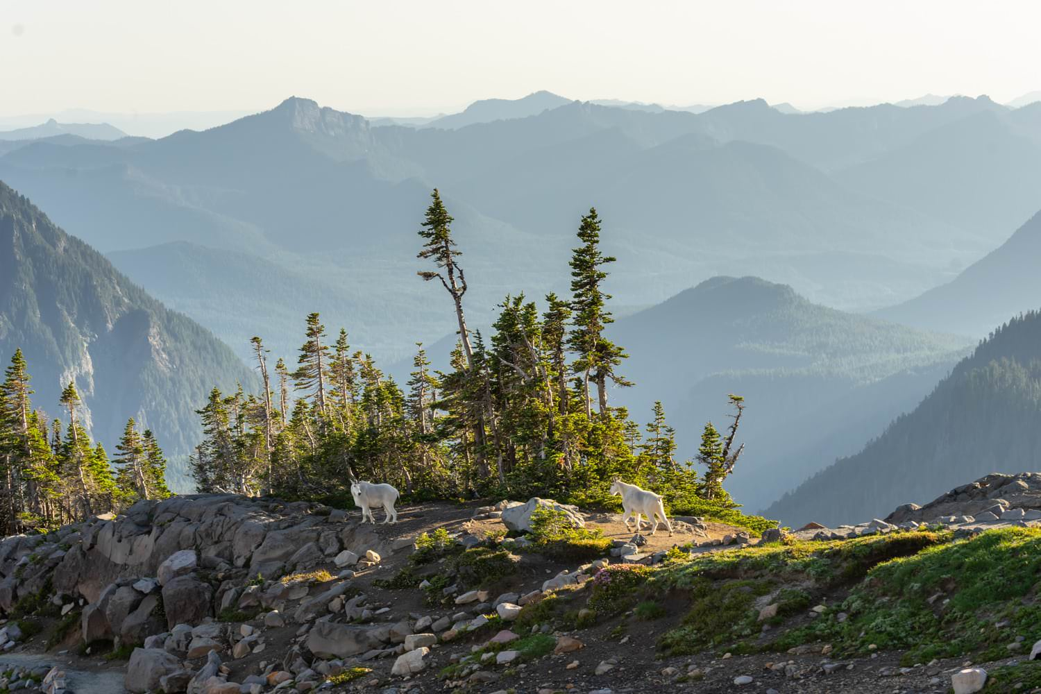 Mount Rainier Mountain Goats Elopement Packages