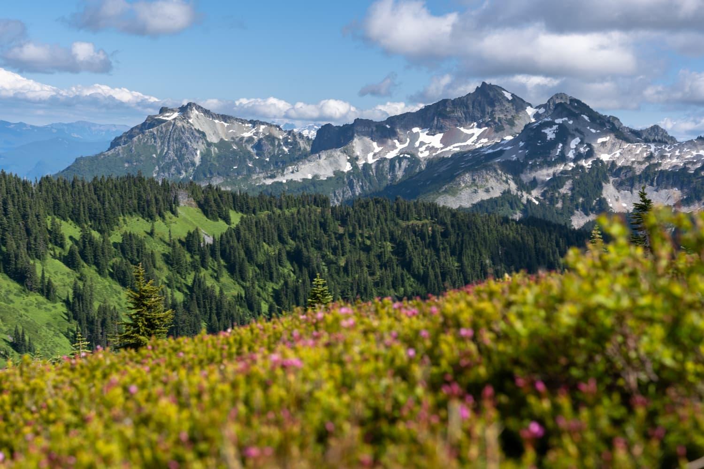 Mount Rainier Wild Flowers Elopement Packages