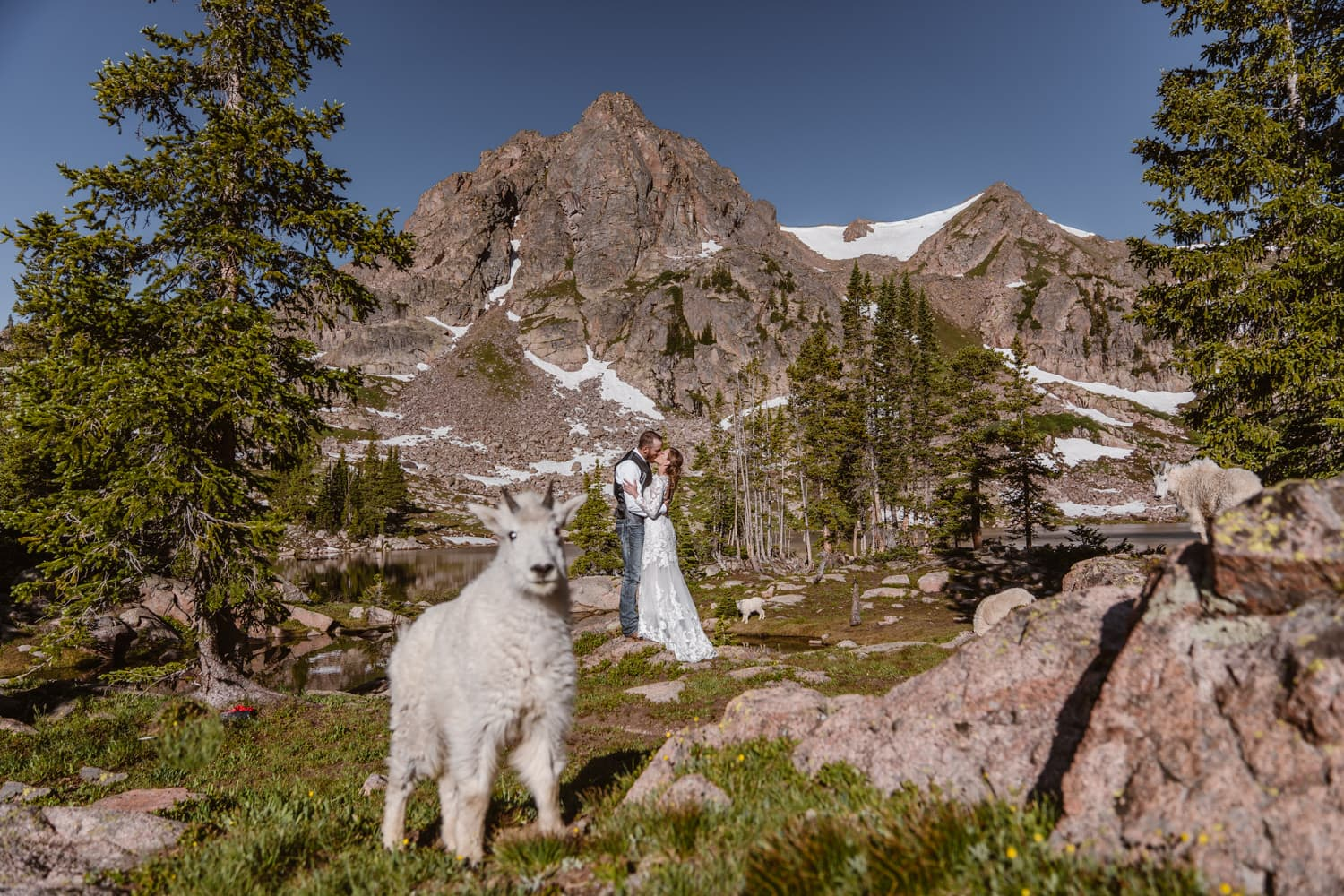Bride and Groom With Goats Backpacking Wedding Elopement